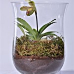 Slipper Orchid custom made terrarium