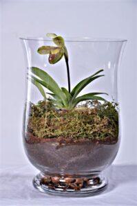 Slipper Orchid custom made terrarium
