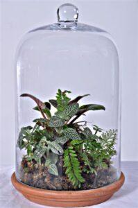 Glass dome terrarium