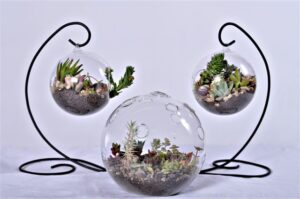 Hand crafted terrariums