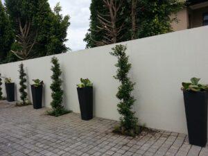 Kylami garden driveway