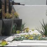 Succulent garden Kylami