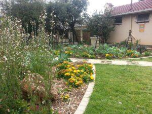 Bryanston organic vegetable garden